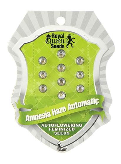 Amnesia Haze Auto (Royal Queen Seeds), 5 autoflowering Samen