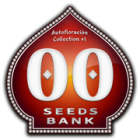 Auto Collection #1 (00 Seeds), 6 automatic Seeds
