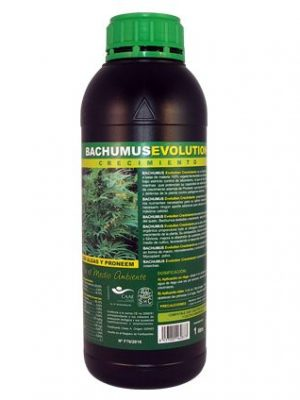 Bachumus Evolution Grow von Trabe