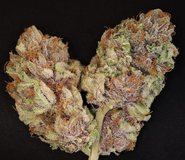 Bubba Kush (Green House Seeds), feminisiert