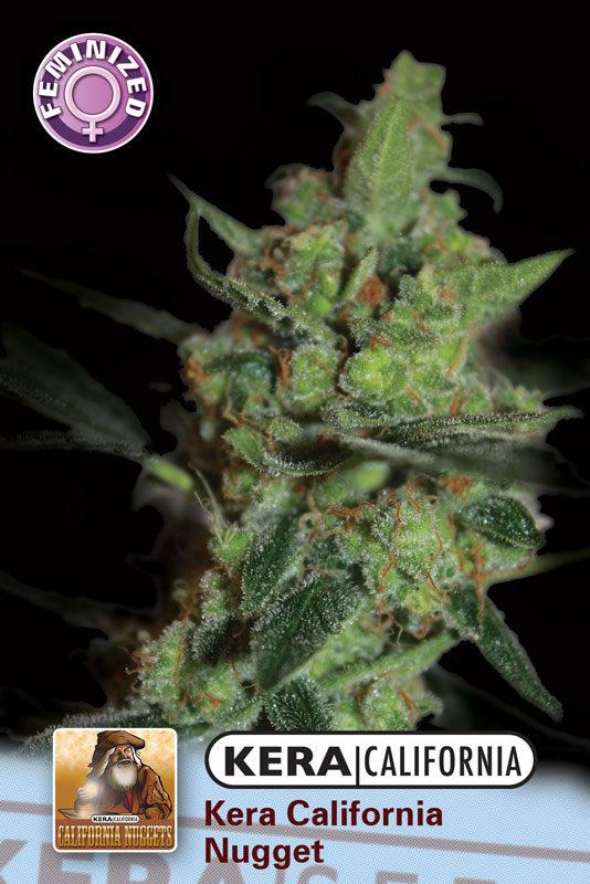 California Nugget (Kera Seeds), 5 feminisierte Samen