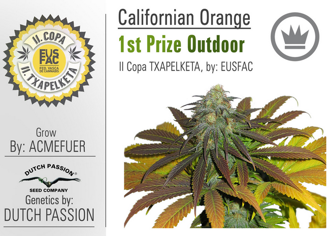 California Orange (Dutch Passion), 3 feminisierte Samen