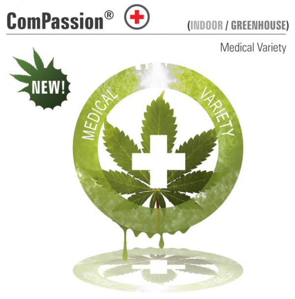 ComPassion (Dutch Passion), feminisierte Samen