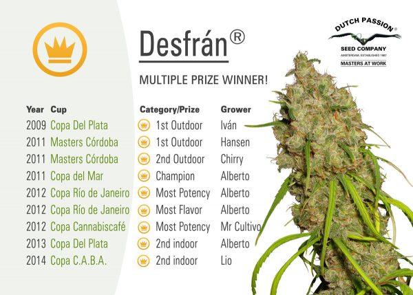 Desfrán (Dutch Passion) 3 feminisierte Samen