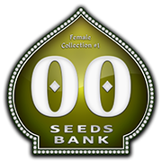 Female Collection #1 (00 Seeds), 6 feminisierte Samen