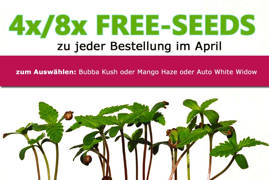 8 Cannabis Seeds for free im April