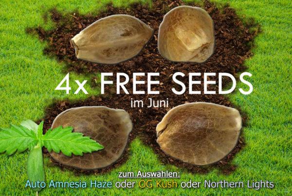 Free Seeds im Juni