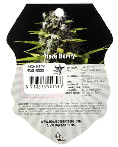 Haze Berry (Royal Queen Seeds), 5 feminisierte Samen