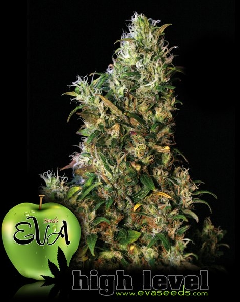 High Level von Eva Seeds, 3 feminisierte Samen