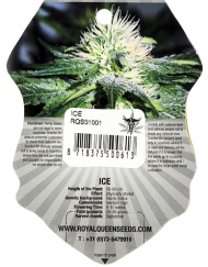 Ice (Royal Queen Seeds), 3 feminisierte Samen