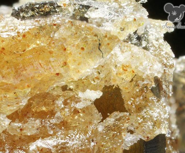 Iceberg (Anesia Seeds), 3 feminisierte Samen