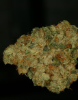 MK-Ultra (T.H. Seeds), 5 oder 10 regular Seeds