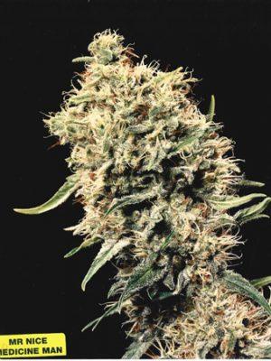 Medicine Man (Mr. Nice) 15 regular Seeds