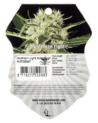 Northern Light (Royal Queen Seeds), 3 feminisierte Samen