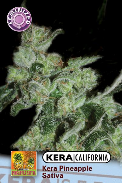 Pineapple Sativa (Kera Seeds), 5 feminisierte Samen