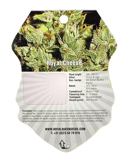 Royal Cheese (Royal Queen Seeds), 3 feminisierte Samen