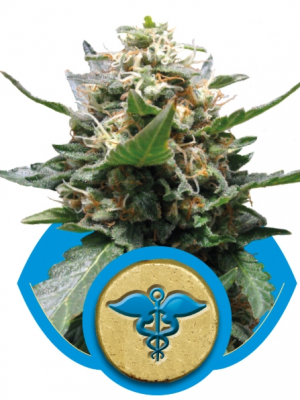 Royal Medic (Royal Queen Seeds), 5 feminisierte Samen