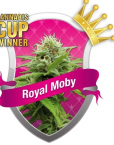 Royal Moby (Royal Queen Seeds), 3 feminisierte Samen
