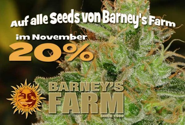 Seedbankprozente November