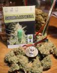 Sour Amnesia (Hortilab), 10 regular Seeds