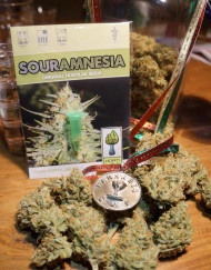 Sour Amnesia (Hortilab), 10 regular Seeds