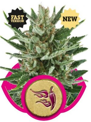 Speedy Chile - Fast Version (Royal Queen Seeds), 3 feminisierte Samen