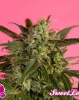 Golo Mix von Philosopher Seeds, 12 feminisierte Samen