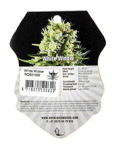 White Widow (Royal Queen Seeds), 3 feminisierte Samen