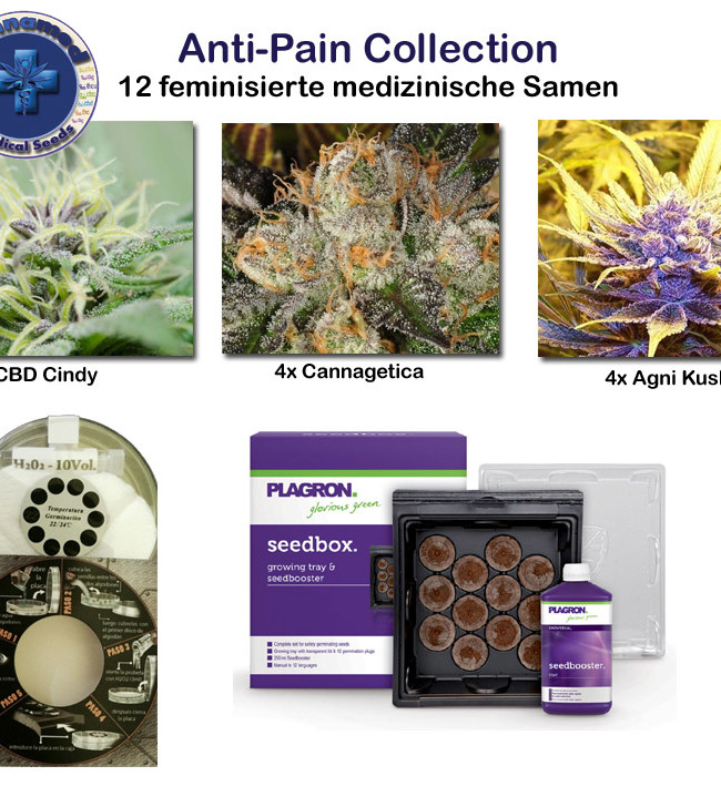 medical Collection - Anti Pain (Cannamed), 12 feminisierte Samen