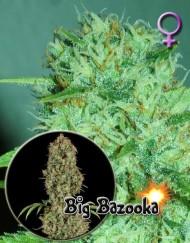 Big Bazooka (Anesia Seeds), 3 feminisierte Samen