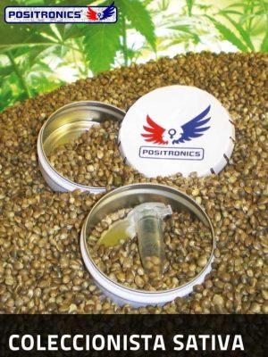 Sativa Collection (Positronics), 6 feminisierte Samen