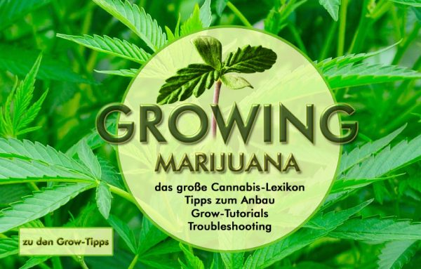 Cannabisanbau, Grow-Guide