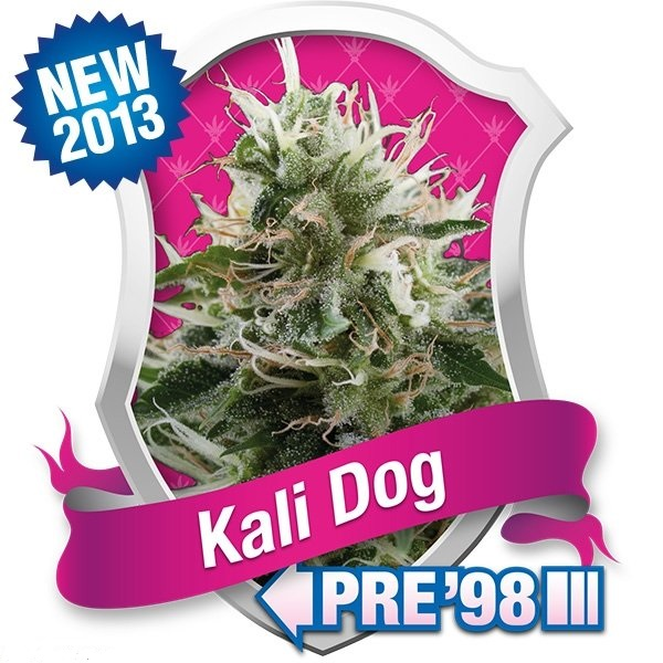Kali Dog (Royal Queen Seeds), 5 feminisierte Samen