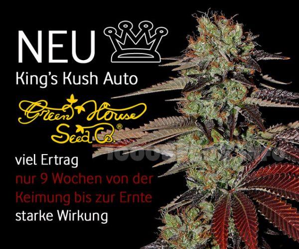 Kings Kush Auto von Greenhouse Seeds