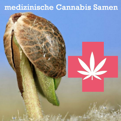 medizinische Cannabis Samen