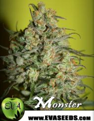Monster (Eva Seeds) 3 feminisierte Samen