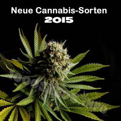neue-Cannabis-Sorten-2015