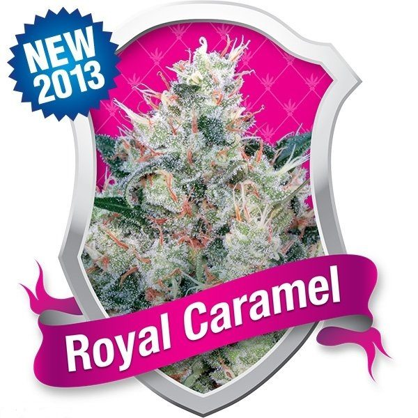Royal Caramel (Royal Queen Seeds), 5 feminisierte Samen