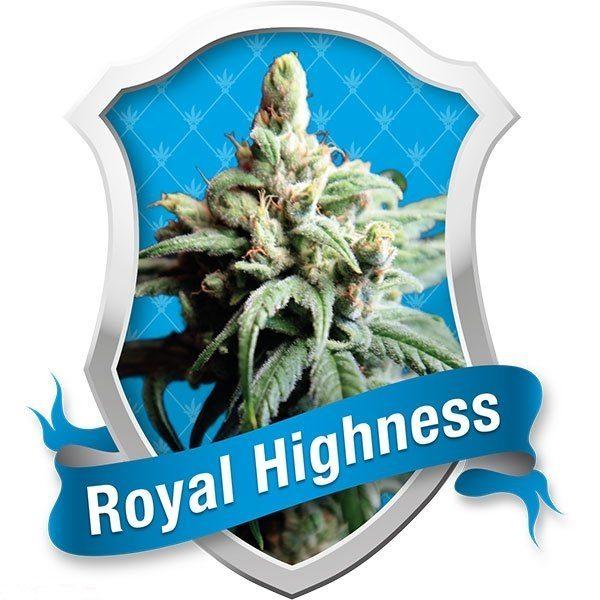 Royal Highness (Royal Queen Seeds), 5 feminisierte Samen