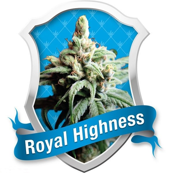 Royal Highness (Royal Queen Seeds), 5 feminisierte Samen
