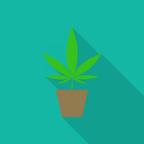 Grwoshop, Komplett-Sets, Indoor-grow, Outdoor-Grow