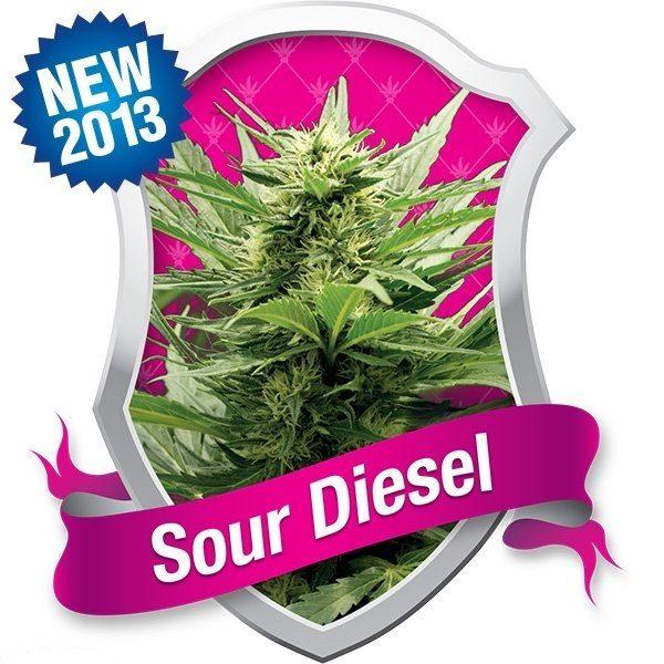 Sour Diesel (Royal Queen Seeds), 5 feminisierte Samen
