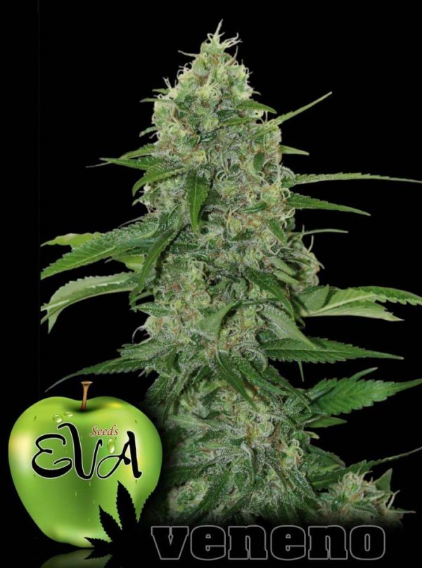 Veneno (Eva Seeds) 3 feminisierte Samen