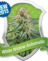 White Widow Automatic (Royal Queen Seeds), 5 autoflowering Samen