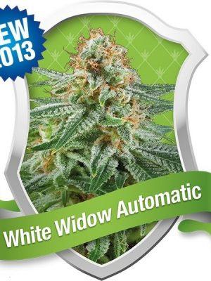 White Widow Automatic (Royal Queen Seeds), 5 autoflowering Samen
