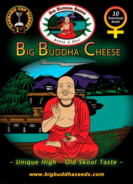 Big-Buddha-Cheese