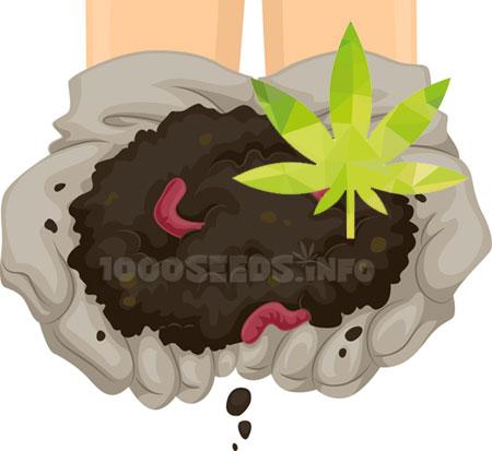 Kompost-Grow, Komposterde Cannabisanbau, Tipps, Grow-Lexikon