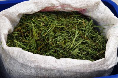 Kompost Cannabisanbau, Komposterde Grow