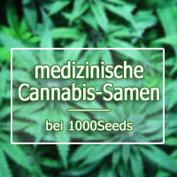 medical Seeds, medizinische Cannabis-Samen kaufen