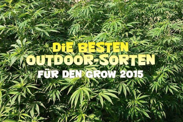 die besten Outdoor-Cannabis-sorten, Seedshop 1000Seeds